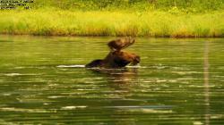 Пробуждающаяся планета: Рассвет на озере и Скандинавский Водопад / Sunrise Earth: Moose in the Morning & Scandinavian Waterfall (2004-2006) Blu-ray 1080p + BDRip 1080p + 720p