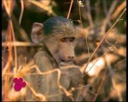 Удивительный мир животных Disney / El Maravilloso Mundo de los Animales Disney / DVDRip