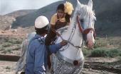 Новые приключения Акмаля (1983) DVDRip