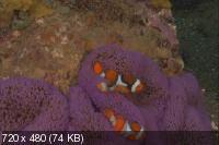 Грёзы Кораллового моря - Пробуждение / Coral Sea Dreaming - Awaken (2010) DVD9