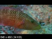 Грёзы Кораллового моря: Пробуждение / Coral Sea Dreaming: Awaken 2010