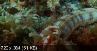 Грёзы Кораллового моря - Пробуждениe / Coral Sea Dreaming - Awaken (2010) DVDRip