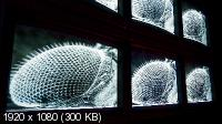 Технология от природы / Nature Tech / Bionik: Das Genie der Natur (2006) Blu-ray Remux