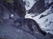 � ������� �������� ����� / Searching for the Snow Leopard (2007) SATRip
